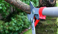 Tree Pruning Services in Los Angeles CA